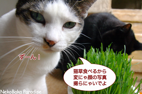 Img_5648_2