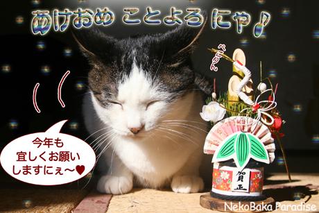 Img_2932yuki