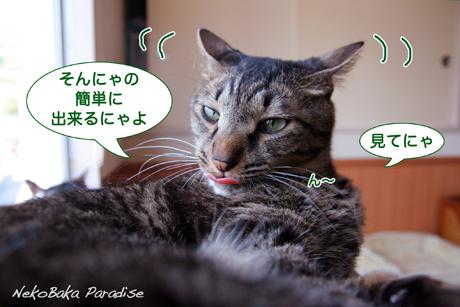 Img_4054_3