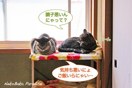 Img_1649_2